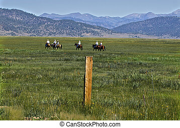 Modern cowboys ride toward the cattle grazing in the open ...
