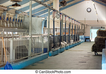 Modern cowshed on farm - Interior of modern cowshed on farm