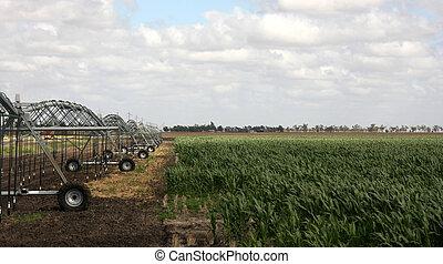 Irragation, Irrigation sprinklers watering a farm field