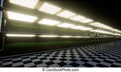Modern green hydroponics Healthy food vegetable plant ...