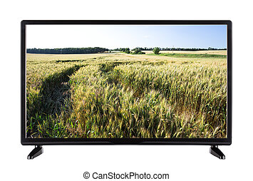 Modern high-definition TV with field of green ears on the screen