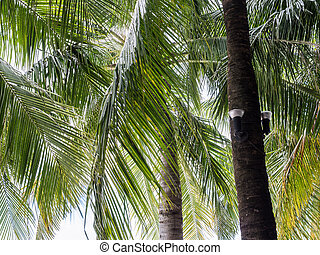 Modern lantern is hanging on the coconut tree.