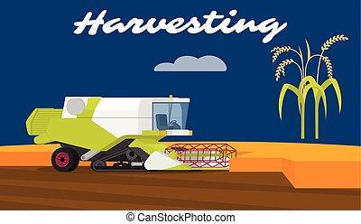 modern, mähdrescher, traktor, arbeitende , a, reis, field.,...