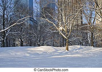 Modern Snow, Central Park