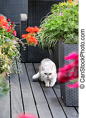 Modern terrace with cat and flowers