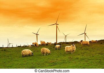 moderne, éolienne, dans, les, crépuscule
