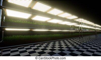 moderne, vert, hydroponique, entrepôt, sain, usine, nourriture, plante, légume, espace, exposition