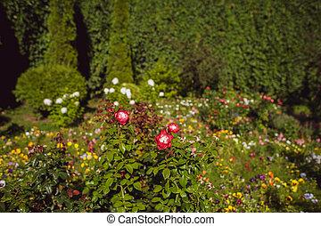 modifié tonalité, jardin, lumière soleil, clairière, fleurir