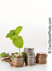 moeda, dinheiro, com, planta verde, crescendo, conceito financeiro