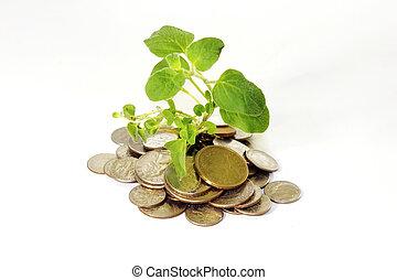 moedas, com, bebê, planta
