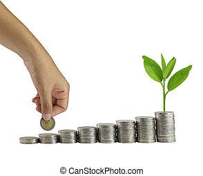 moedas, isolado, mão, white., copa árvore, ponha, pilha