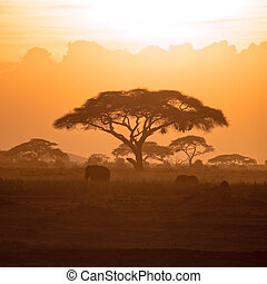 moeder, en, kalf, elefant, in, amboseli, op, ondergaande zon
