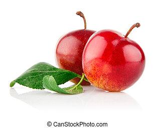mogen, plommon, frukter, med, grönt lämnar
