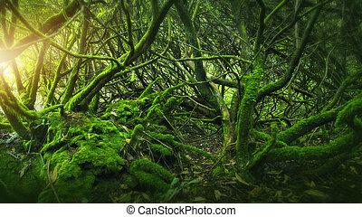 mohás, erdő, írország