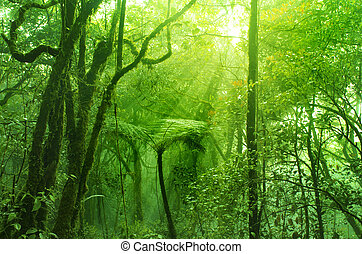 mohás, erdő