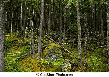 mohás, montana, erdő