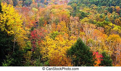 mohican, otoño
