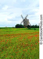 moinho de vento, papoula campo