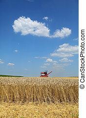 moisson blé, agriculture, combiner