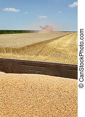 moisson blé, agriculture