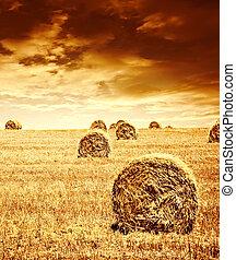 moisson blé, temps