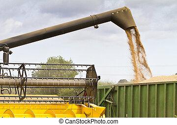 moissonneuse-batteuse, grain, offloading