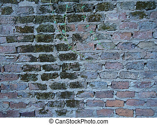 moisture in a wall with Urban Ruins