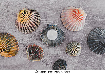 moisturizer on top of sea shell beauty products with natural...