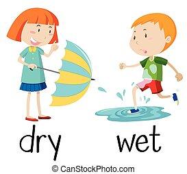 mojado, seco, contrario, wordcard