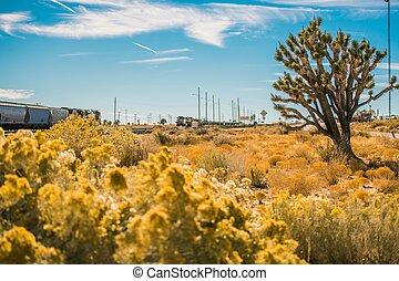 mojave, california, deserto