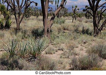 Mojave Desert of California