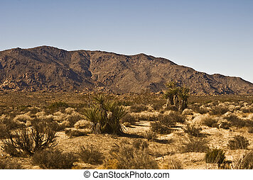 This is a picture of the Mojave Desert with sage brush and yucca