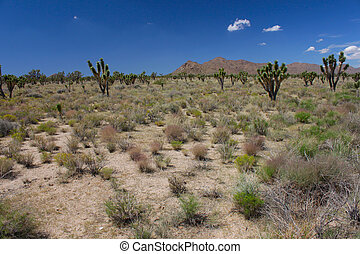 The arid expanse of the Mojave National Preserve in California.