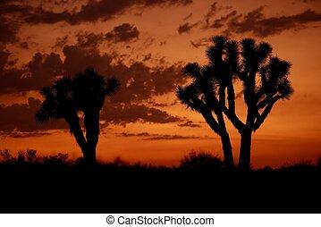 mojave, pôr do sol, deserto
