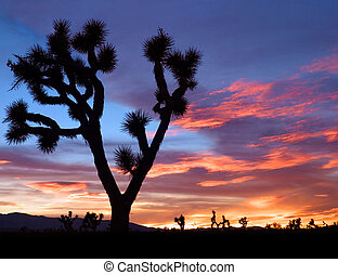 Mojave Sunset - The silhouette of a Joshua tree at sunset in...
