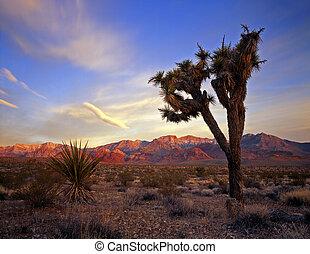 mojave, yucca&desert