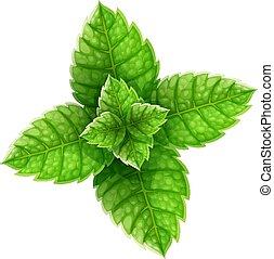 mojito, boisson, vue, menthe, feuilles, sommet, vert