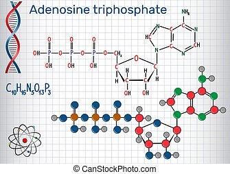 molécula, papel, cage., adenosine, energia, necessário, ...