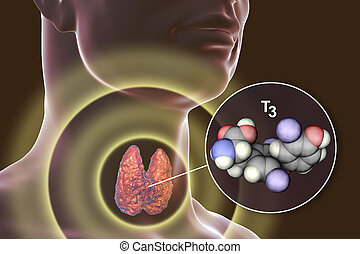 molécula, tiroides, hormona, t3