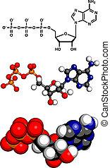 molécule, énergie, (atp), triphosphate, chimique, transport, adenosine, structure
