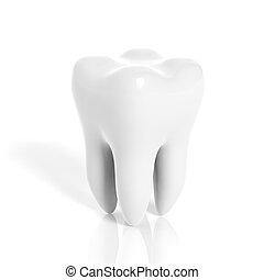 molar, branca, isolado, fundo, dente