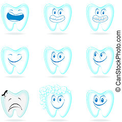 molar dental characters
