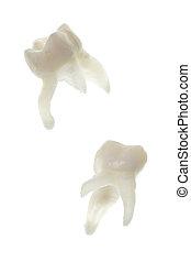 molar, extracted, bebê, raizes, dentes