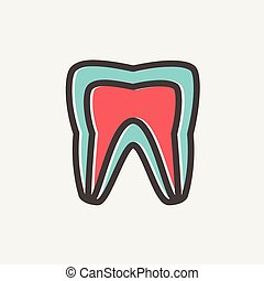 Molar tooth thin line icon