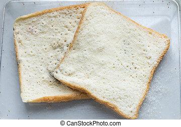 mold, bread, experiment, videnskab, laboratorium, udsnit