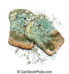Photo of a piece of the gray bread, covered a mold (on a white background)