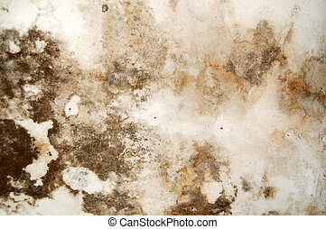 Mold growth and water stains on the ceiling of an abandoned house.