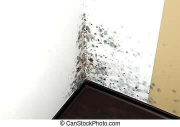 Mold in a edge of a room of a house