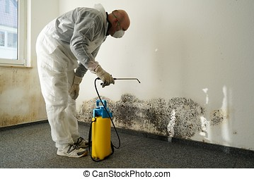mold in an apartment - specialist in combating mold in an...