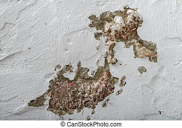 Mold on a freshly painted apartment wall. The wall surface was damaged by mold.